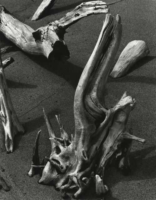 , 'Driftwood Hawaii,' 1978, Timeless Gallery