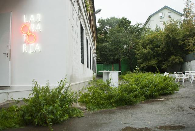 , 'Nettle,' 2013 , Laboratoria Art & Science Space