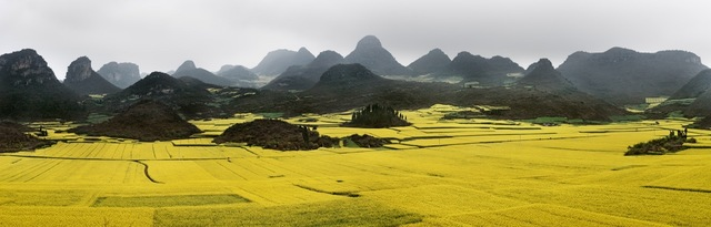 , 'Canola Fields #2, Luoping, Yunnan Province, China,' 2011, Nicholas Metivier Gallery