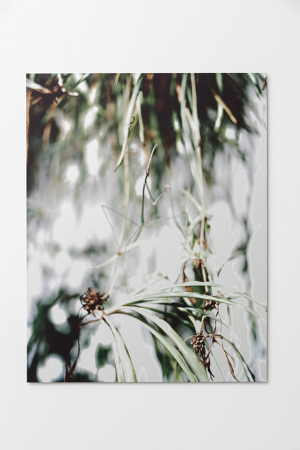 , 'Schizocephala Bicornis,' 2017, Galleri Nicolai Wallner
