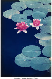 Lily Pads, Balboa Park, San Diego, California (two photographs)