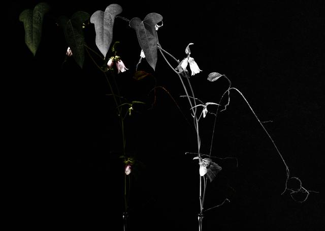, 'lumières d'argent 2,' 2016, Galerie Marie-Robin
