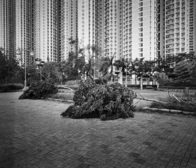, 'The Whiteness of Trees,' 2018, Asia Society Hong Kong