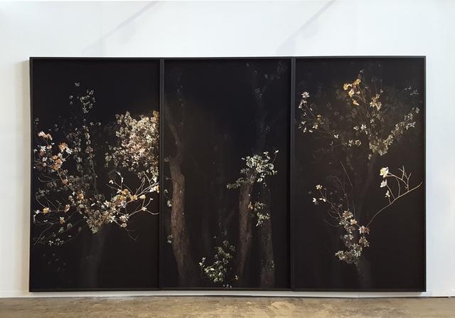 Giovanni Ozzola, 'Omnia munda mundis', 2018, GALLERIA CONTINUA
