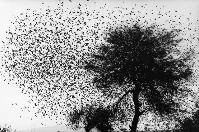 , 'Árbol con pájaros, Carretera México-Guanajuato,' 90's, MATE Museo Mario Testino