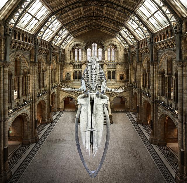 , 'Balaenoptera Musculus | London, UK,' 2018, UNIX Gallery