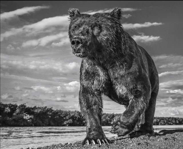 David Yarrow, 'The Fisher King ', Photography, Kunsthuis Amsterdam