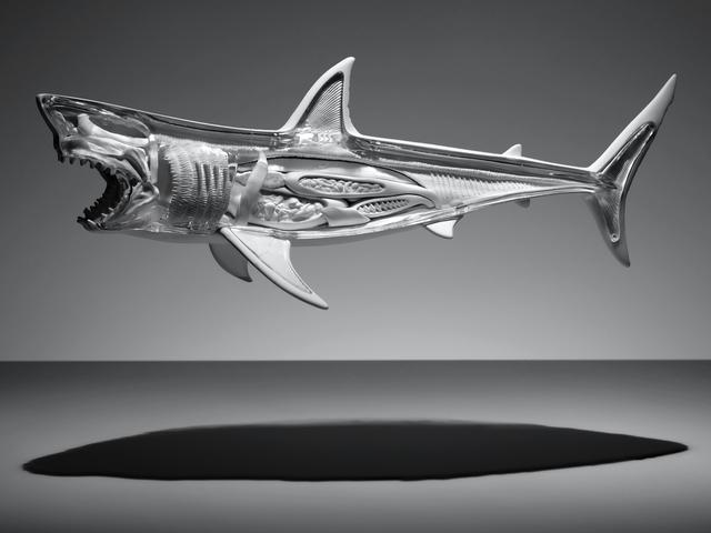 , 'SHARK,' 2015, Ricardo Reyes