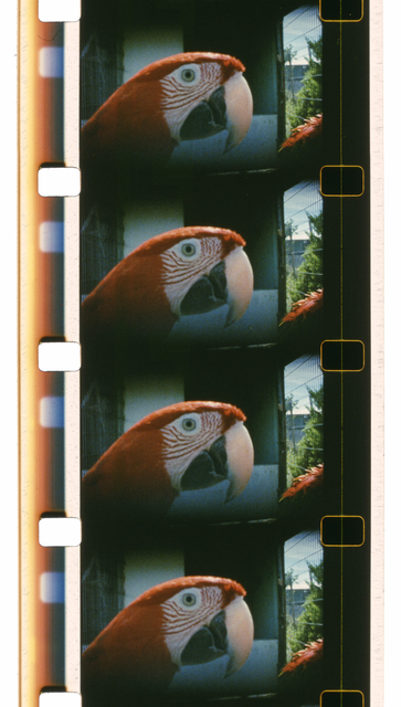 , 'Glossolalia (Good Morning),' 2014, EYE Filmmuseum Amsterdam