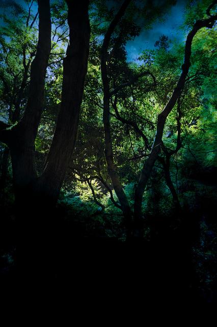 Yasuo Kiyonaga, 'Split of the forest 42', 2010, Photo Gallery Artisan