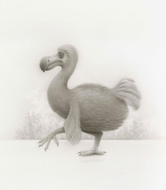 , 'Curious Dodo Bird,' 2017, Haven Gallery