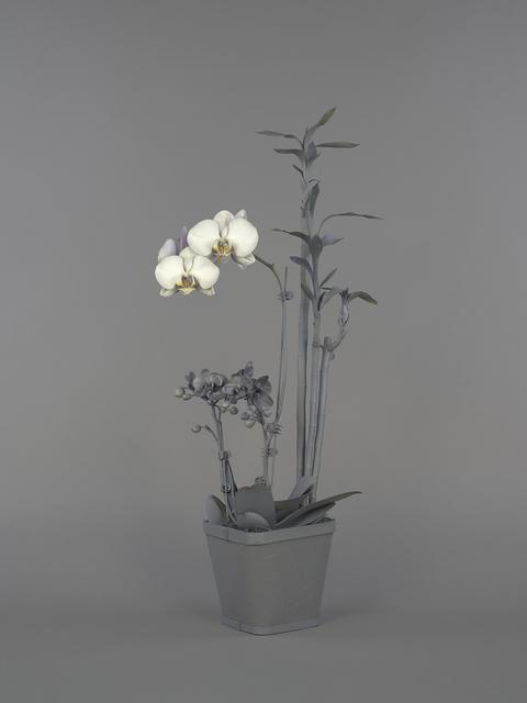 , 'Neutral Orchids (Phalaenopsis + Dracaena sanderana),' 2016, Catharine Clark Gallery