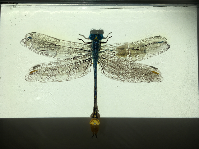 , 'Erpetogomphus Eutainia MTV,' , Peninsula Gallery