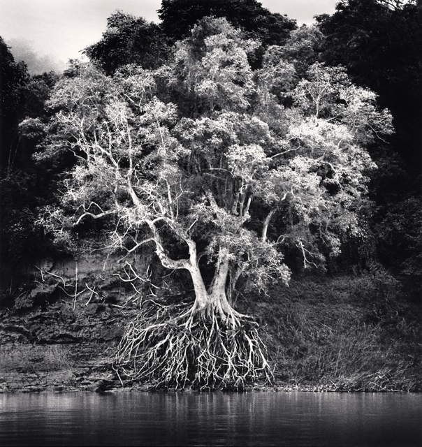 , 'Kokdua Tree and Exposed Roots, Mekong River, Luang Prabang, Loas,' 2015, A Gallery for Fine Photography