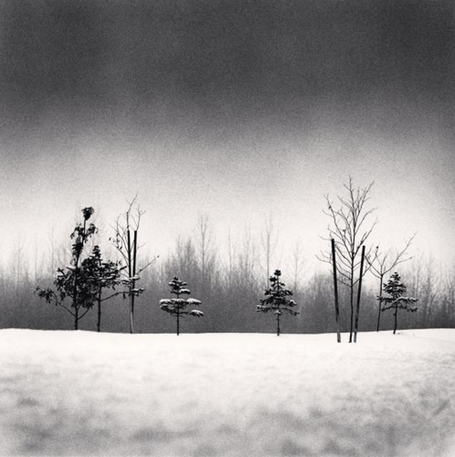 Michael Kenna, 'Small Trees, Anchorage, Alaska, USA', 1989, Photography, Gelatins silver print, PDNB Gallery