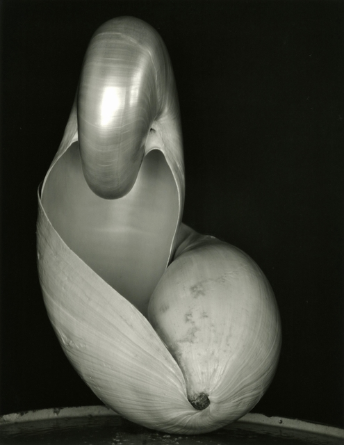 , 'Two Shells,' 1927, Timeless Gallery