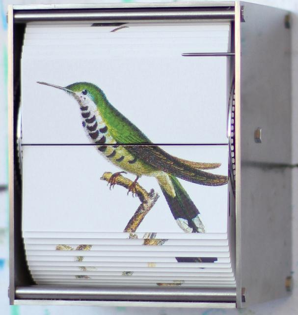 , 'Ornithology I ,' 2015, Conduit Gallery