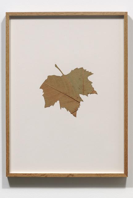 , 'Hybrids (V),' 1978-1979, Jessica Silverman Gallery