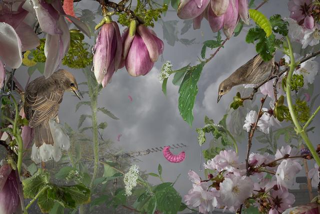, 'Early-Bird,' 2017, Pentimenti Gallery