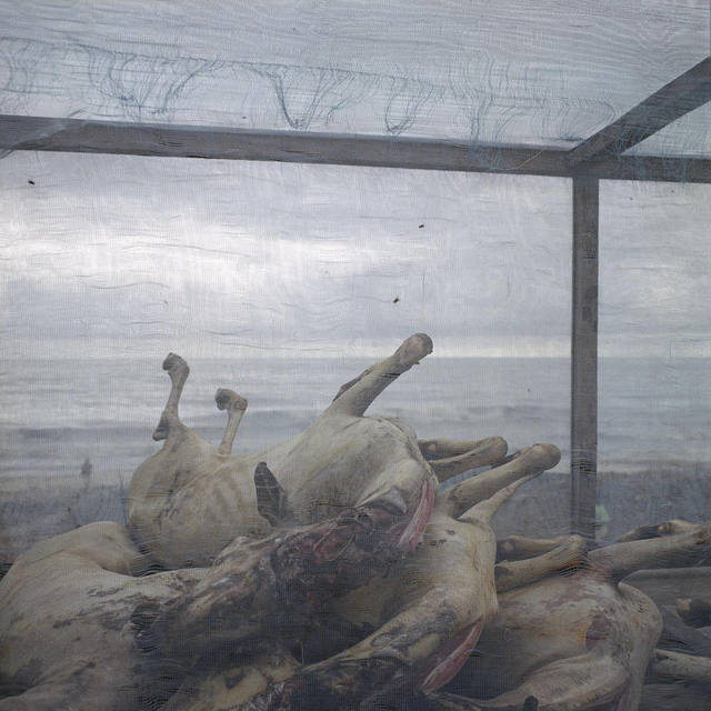 , 'Carcasses de chèvres,' 2014, Galerie Peter Sillem