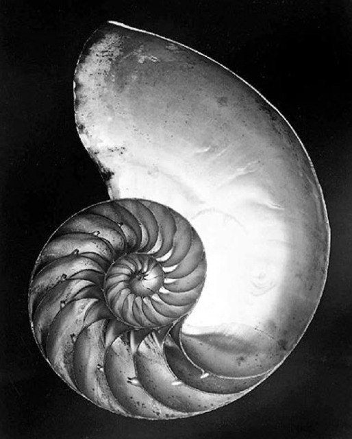 , 'Chambered Nautilus (Shell),' 1927-printed later by Cole Weston, Scott Nichols Gallery