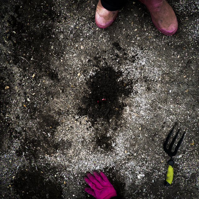 , 'The Zuchinni Seed,' 2013, photo-eye Gallery