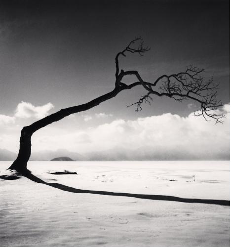 Michael Kenna, 'Kussharo Lake Tree, Study 10, Kotan, Hokkaido, Japan', 2005, Weston Gallery