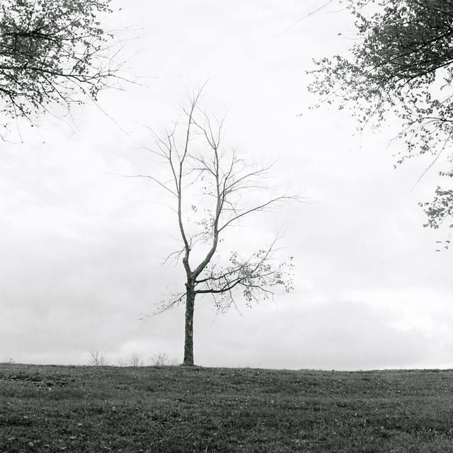, '木 Tree,' 2017, Galerie D'Este