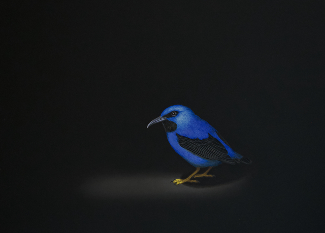 Isabelle du Toit, 'Purple Honeycreeper', 2018, Cris Worley Fine Arts