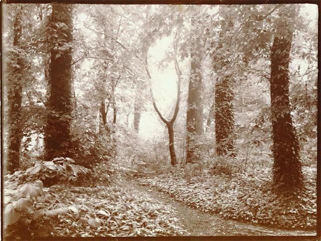 Léonard Misonne, 'A Leafy Path', 1920s, Contemporary Works/Vintage Works