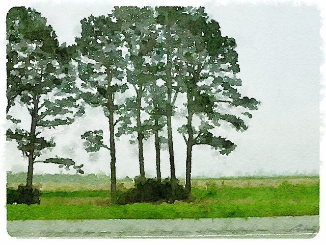 Anne M Bray, 'Pines, Louisiana', 2014, TAG Gallery