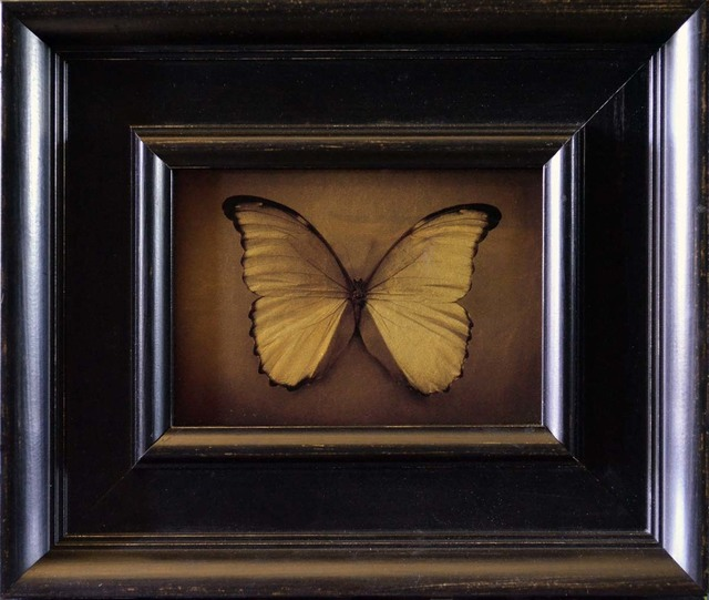 , 'Blue Morpho,' , Catherine Couturier Gallery