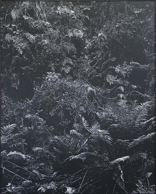 , 'Undergrowth II,' 2017, SMAC