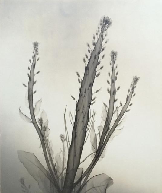 , 'Desert Candle,' 1937, Michael Dawson Gallery