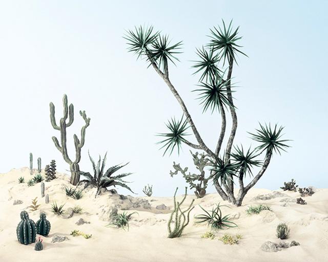 , 'Cactus Mussard,' 2014, Julie Saul Gallery