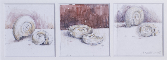 , 'Studies of fossil shells,' 2009, Monsoon Publishing / Ugg Boot Press / Red Rag Press
