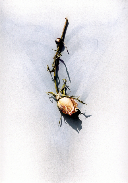 Laura Fantini, 'Wedding Rose', 2019, Drawing, Collage or other Work on Paper, Colored Pencil/Illustration Board, Miller White Fine Arts