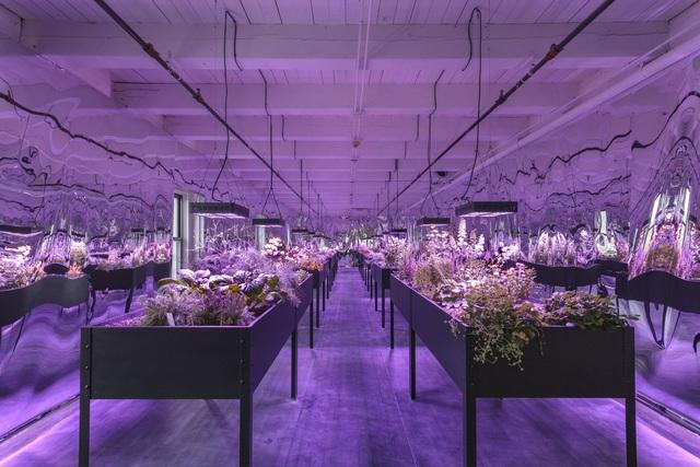 , 'Solar Grow Room,' 2017, Mattress Factory