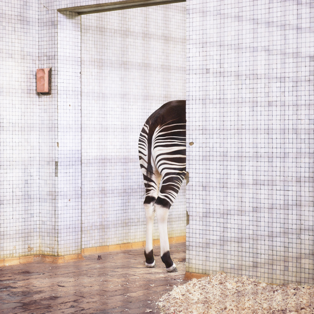 , 'Zebra,' 2014, Litvak Contemporary