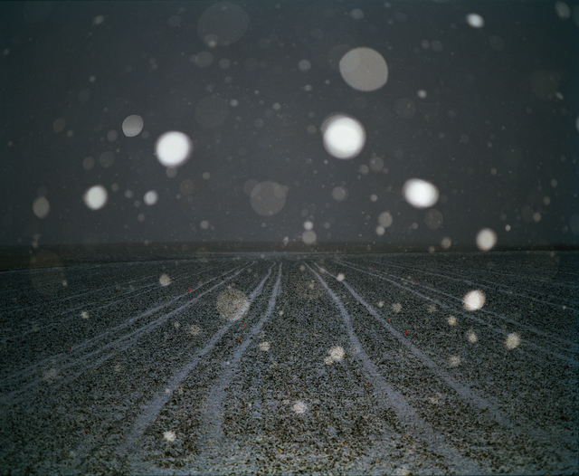 , 'Snow and Field,' , Pictura Gallery