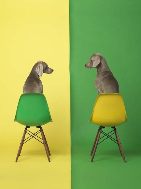 William Wegman, 'Yellow Two Green', 2015, Betsy Senior Fine Art