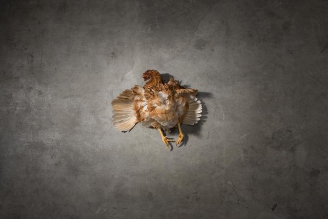 , 'Fallen 4,' 2017, Dominik Mersch Gallery