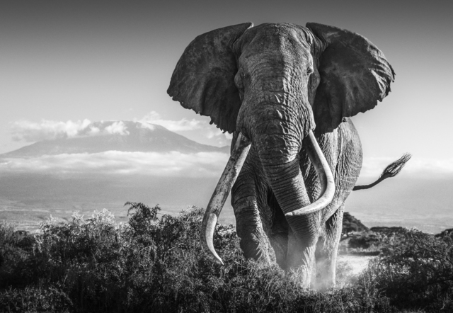 David Yarrow, 'AFRICA', 2018, Photography, Archival Pigment Print, Hilton Asmus
