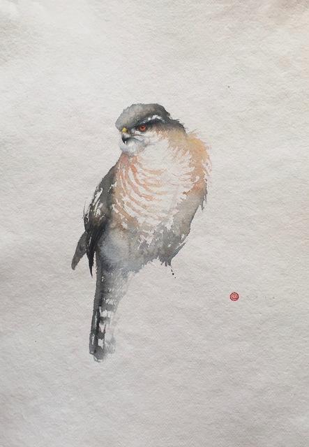 , 'Sparrow Hawk,' , Gladwell & Patterson