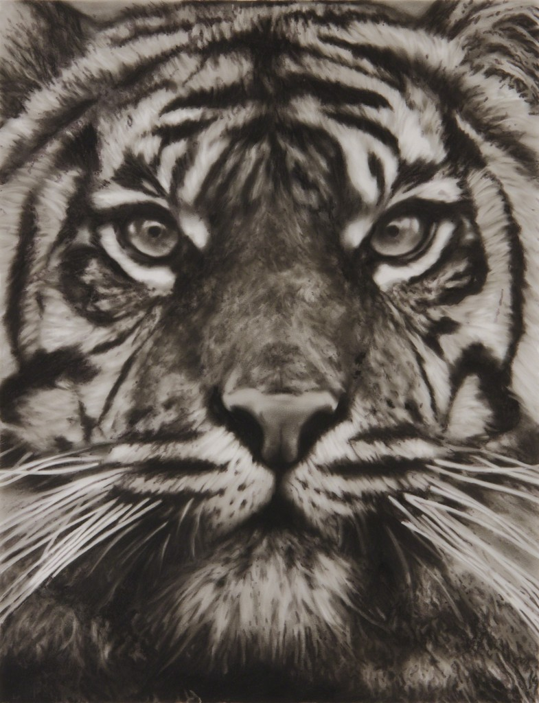 Study of Tiger Head 18