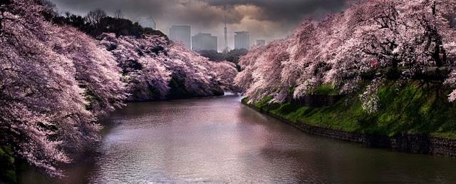 David Drebin, 'Pink Spring, Tokyo', 2015, CHROMA GALLERY
