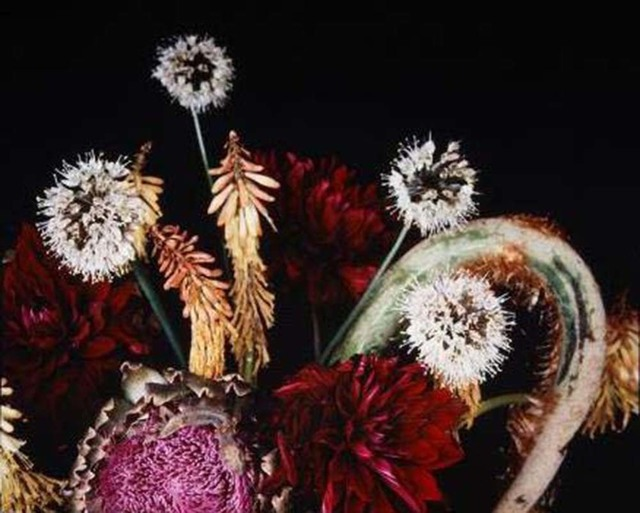 Nobuyoshi Araki, 'Untitled, from the series »Flowers & Jamorinsky«', 2005-2006, Ostlicht. Gallery for Photography