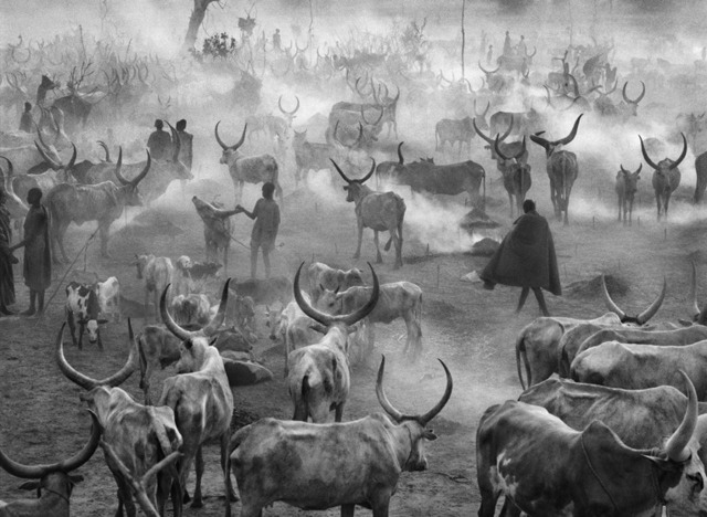 , 'Dinka cattle camp of Amak. Southern Sudan.,' 2006, Sundaram Tagore Gallery