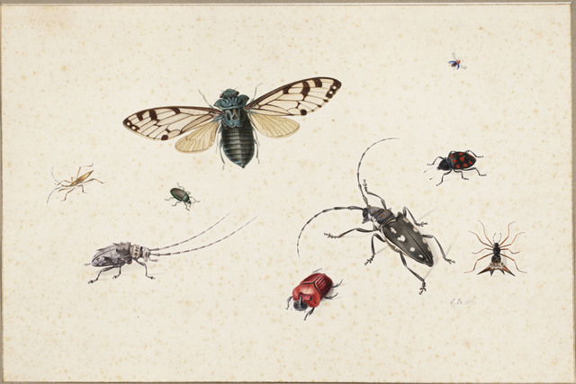 , 'Studies of a cicada, a cereal-leaf beetle (Oulema melanopus), a harlequin ladybird (?), a spiny orb-weaver spider, an Asian longhorn beetle, a (red) rhinoceros beetle, a rosemary beetle, another longhorn beetle and a stick insect,' ca. third quarter seventeenth century, Mireille Mosler Ltd.