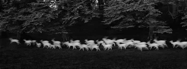 , 'Running White Deer, Wicklow Ireland,' 1967, Catherine Couturier Gallery